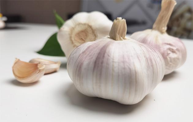 Bulk Fresh Garlic Wholesale Price