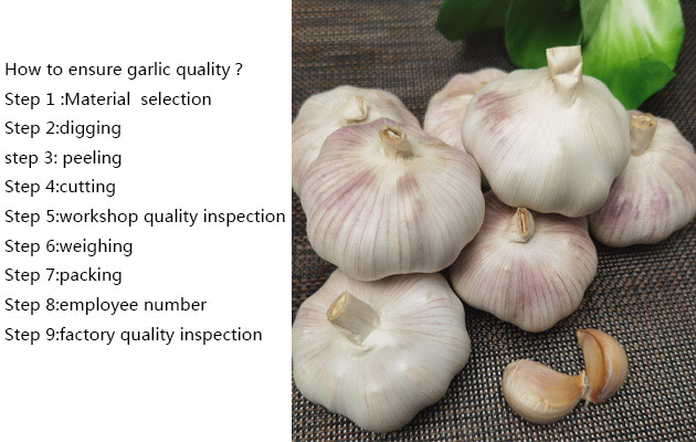fresh garlic wholesale price