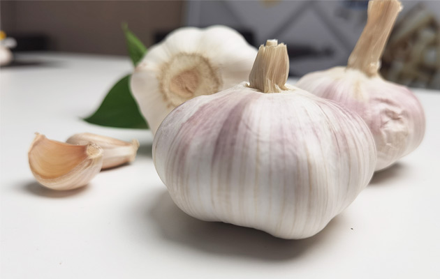 garlic price